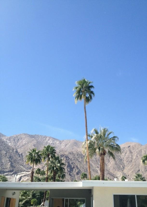 palmsprings5