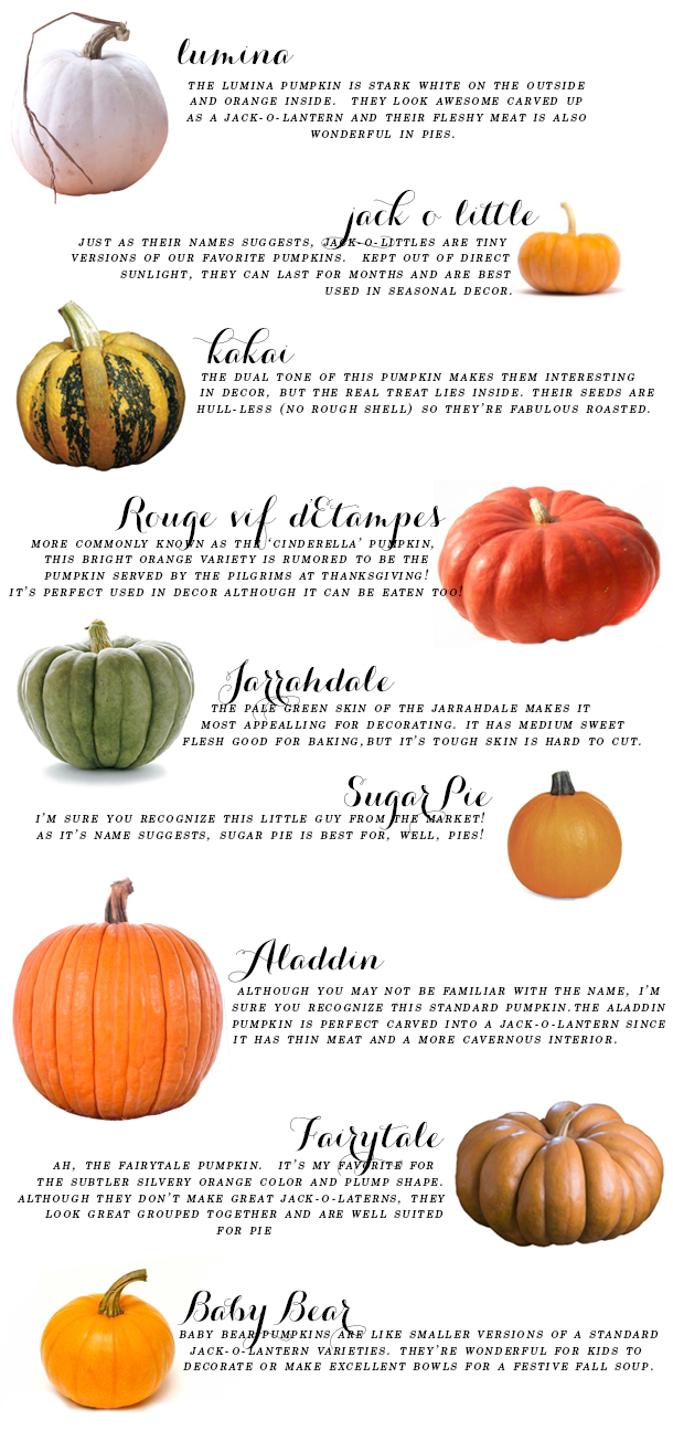 Your Ultimate Fall Pumpkin Guide - Earnest Home co.